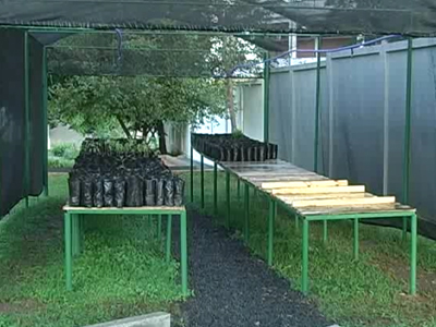 Copasa produz mudas para recuperação de nascentes. Viveiro é o segundo do distrito de São Sebastião do Paraíso. (foto: Reprodução / TV Sul)