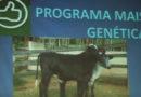 Programa Mais Genética é apresentado em Guaxupé