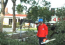 Prefeitura inicia poda das árvores da Avenida Dona Floriana