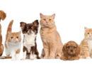 Tem início primeira etapa da campanha de vacinação contra a raiva em cães e gatos