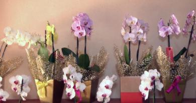 Orquídeas: impossível não se encatar com estas flores