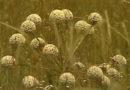 Sistema agrícola utilizado em Minas pleiteia selo internacional da ONU