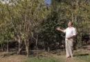 Florescer: conheça a composição do músico Davi Pasqua