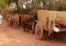 Família troca carro pelo carro de boi em Varginha
