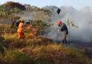 Corpo de Bombeiros registra aumento de 35% dos casos de queimadas