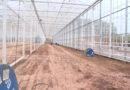 Estufas de vidro para produção de tomates em Andradas