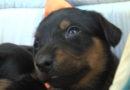 Participe da Campanha Lojista Solidário e ajude os animais em situação de abandono