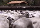 Pequenos produtores não param durante a pandemia, técnicos auxiliam o trabalho no campo