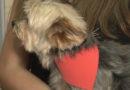 Médico veterinário fala sobre os cuidados com pets durante o período de baixas temperaturas