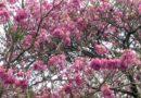 Com temperaturas amenas a primavera começou nesta terça-feira (22)