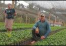 Cafeicultora de Juruaia produz as próprias mudas de café e conquista concursos