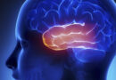 A ABE, preparou uma agenda com temas importantes que tratam da conscientização sobre a Epilepsia
