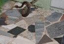 Bombeiros de Guaxupé capturam cobra Jaraca em jardim de residência