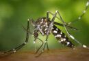 Levantamento do índice rápido do Aedes Aegypti no início de janeiro aponta médio risco