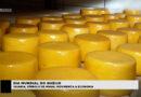 Dia mundial do queijo: símbolo de Minas, movimenta a economia