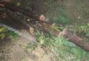 Árvore de grande porte cai e provoca acidente na rodovia AMG-1530