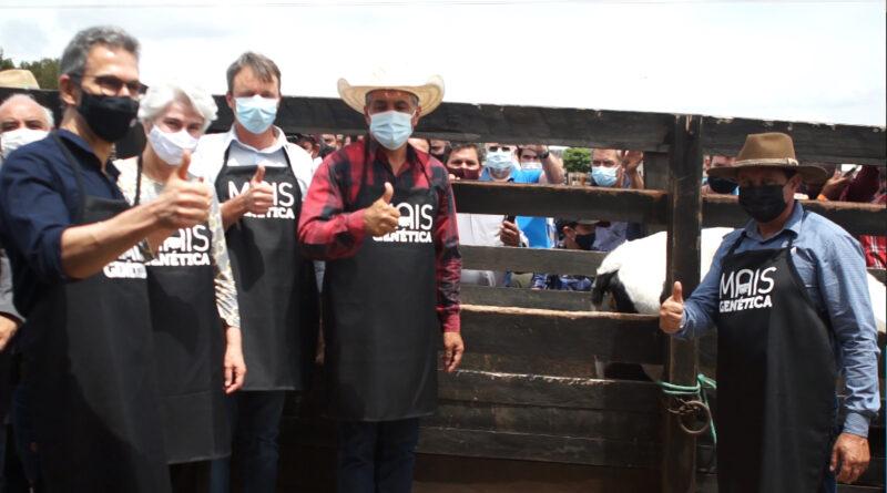 Zema visita Nova Resende acompanha a inseminação uda vaca número 100 mil do programa Mais Genética